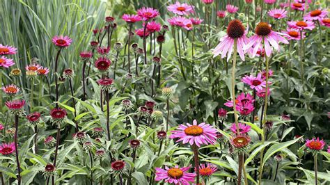 cottage garden plants 13 cottage garden plants for cold zones grow beautifully