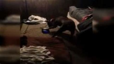 dog hits  snooze button