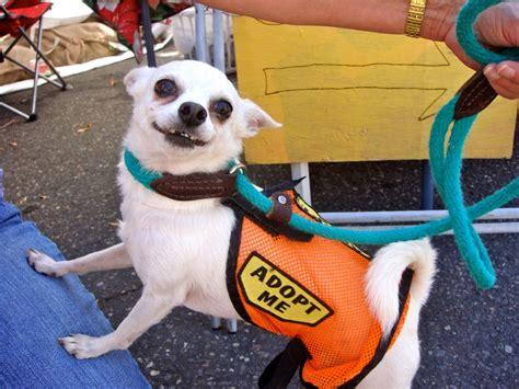 adopt a denver adoptable animals denver animal shelter
