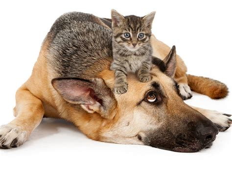 dogs and cats has finally proven the differences between cat