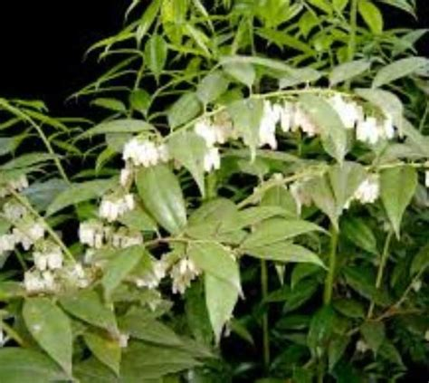 238 best images about fragrant native flowers for south florida for those of us who love