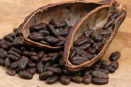 le comptoir du cacao comptoir du cacao chocolatier confiseur 16 232 me