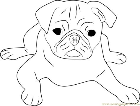 coloring pages of pugs dogs pug coloring page free coloring pages