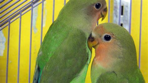 marta s pet shop toronto pet store pets birds