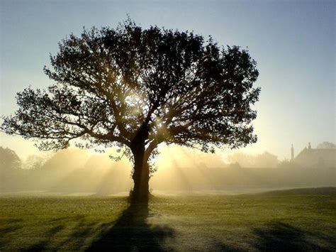 tree photography photo gallery how to take phone pictures