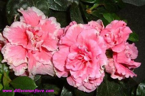 fiori all estero giardinaggio calendario mostre floreali in italia e all estero