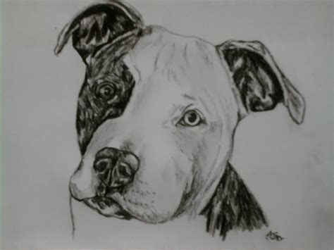 pitbull puppy portrait by sugarskull tattoos on deviantart