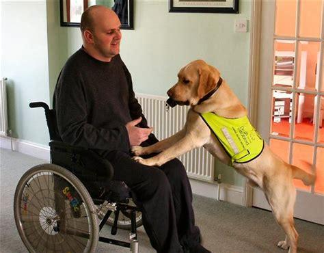 assistance dogs assistance dogs tasks assistance dogs task work service dogs tasks