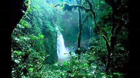 amazon brazil planning your jungle holiday in the brazilian amazon
