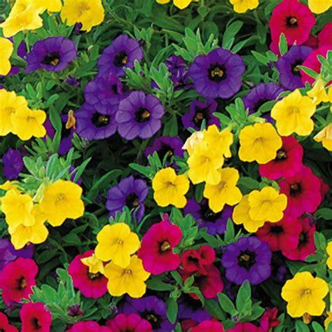 flower gardening tips 58 best merry million bells images on million