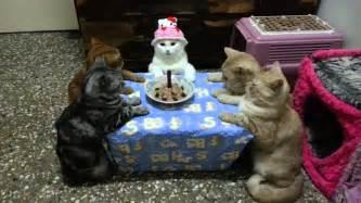 birthday cat meowoof