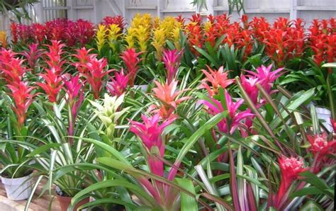 how to care for tropical house plants bromeliads shady indoor plants mission