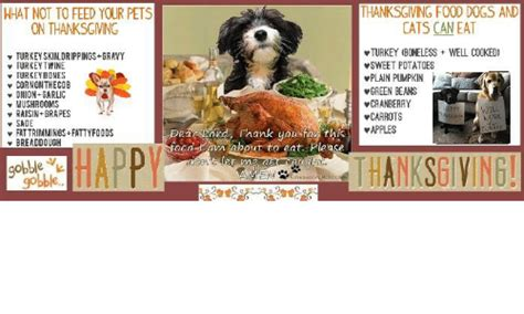 can dogs eat cooked mushrooms thanksgiving food dogs and what not to feed your pets cats can eat on thanksgiving