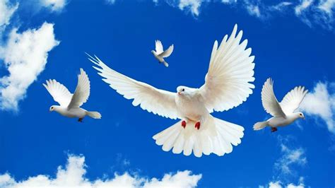 doves hd wallpaper 557370 jpg 17 best images about religious s lions doves on