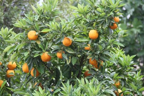 types of fruit trees with pictures all types of fruit trees pictures to pin on