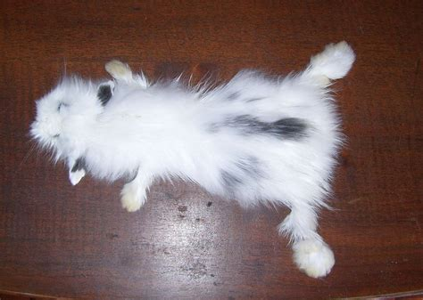 black and white rabbit wallpaper black and white bunny pelt sold by deerfishtaxidermy on