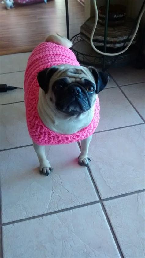 pattern for pug clothes i modified this crocheted dog sweater to fit our slightly