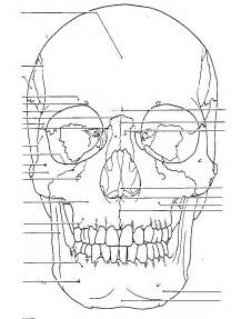 anatomy coloring pages free coloring pages of human anatomy labeling