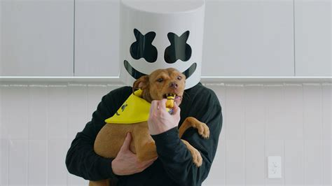 marshmello dog video how to make quot happier quot dog treats cooking with marshmello