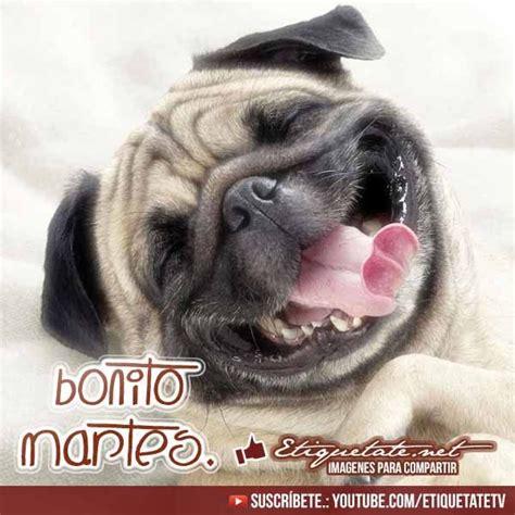 imagenes feliz martes animales 17 mejores ideas sobre feliz martes chistoso en pinterest
