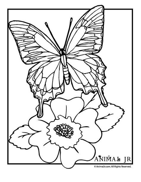 georgia bulldogs coloring pages coloring home