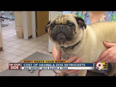 how much does a puppy cost at petsmart how much do pets really cost doovi