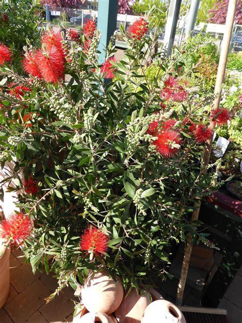 h ngematte f r den balkon winterharte k 252 belpflanzen f 252 r balkon winterharte k