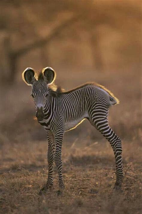 Baby Zebra baby zebra when we were