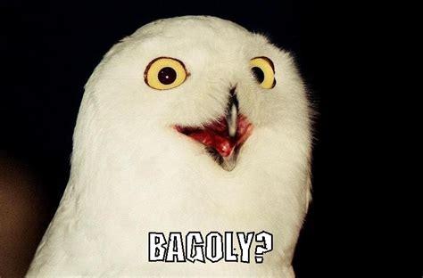 Orly Meme - orly meme 28 images o rly owl meme baba o rly by