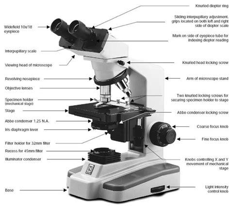 Compound Light Microscope Diagram by Compound Microscope Parts Ch Asad Jutt