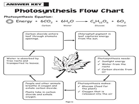 steps of photosynthesis flowchart photosynthesis flowchart create a flowchart