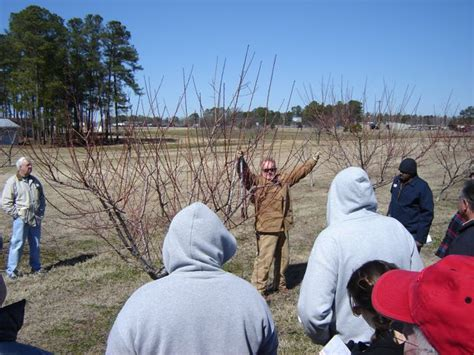 pruning fruit tree fruit tree and pruning demonstration
