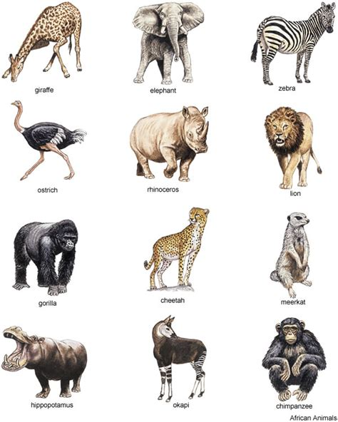 american zoo a sociological safari books grey bungalow free clipart animals