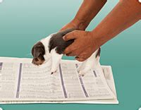 house break dog indoor potty training papers pee pads turf pads litter boxes and more the