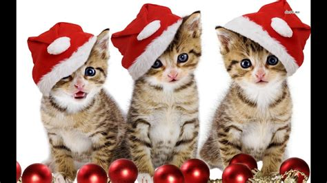 cat christmas wishes youtube