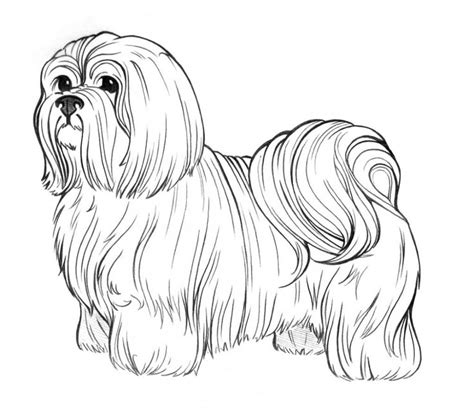 dog breed coloring pages shih tzu pinterest