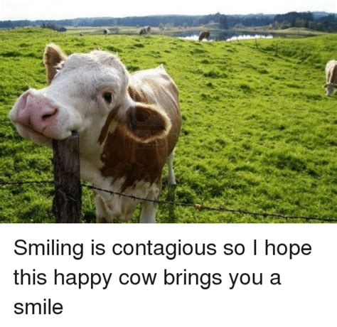Cow Memes - 25 best memes about happy cow happy cow memes