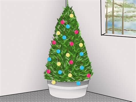 how to care for a living christmas tree 7 steps with