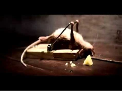 mouse benching mouse trap raton que hace ejercicio youtube