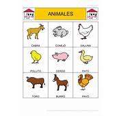 Bingo De Animales Dom&233sticos