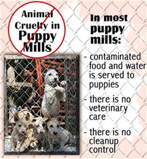 puppy mill facts facts about puppy mills