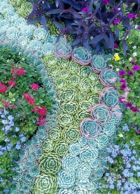 piante grasse giardino un giardino di piante grasse 20 esempi stupendi da cui