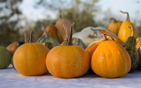 pumpkins wallpaper pumpkins wallpaper 1021735