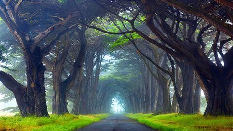 nature tunnel  trees  point reyes national seashore california desktop wallpaper hd