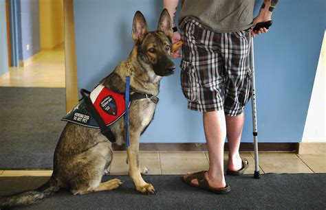 va service dogs nbcnews
