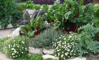 eat your yard how to design an edible landscape nature