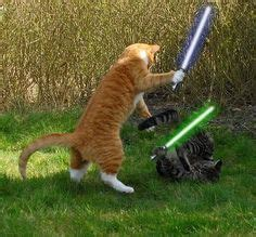 lightsaber knitting needles for sale 1000 images about laser cats on cats jedi