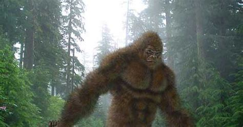 Bigfoot Search Images Of Sasquatch Search