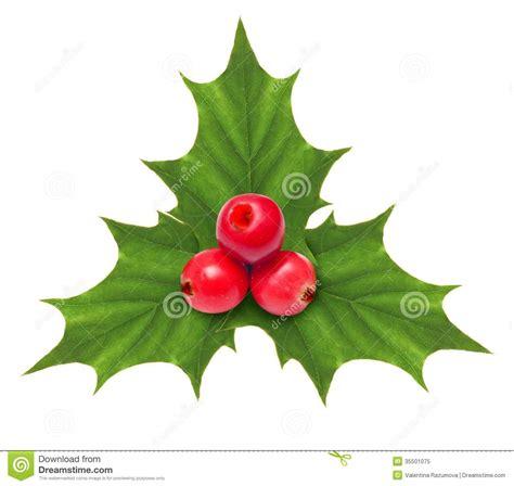 christmas berries decorations psoriasisguru com