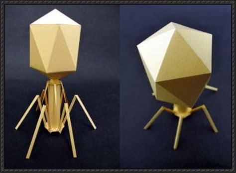 Biology Origami - science paper model bacteriophage t4 virus free